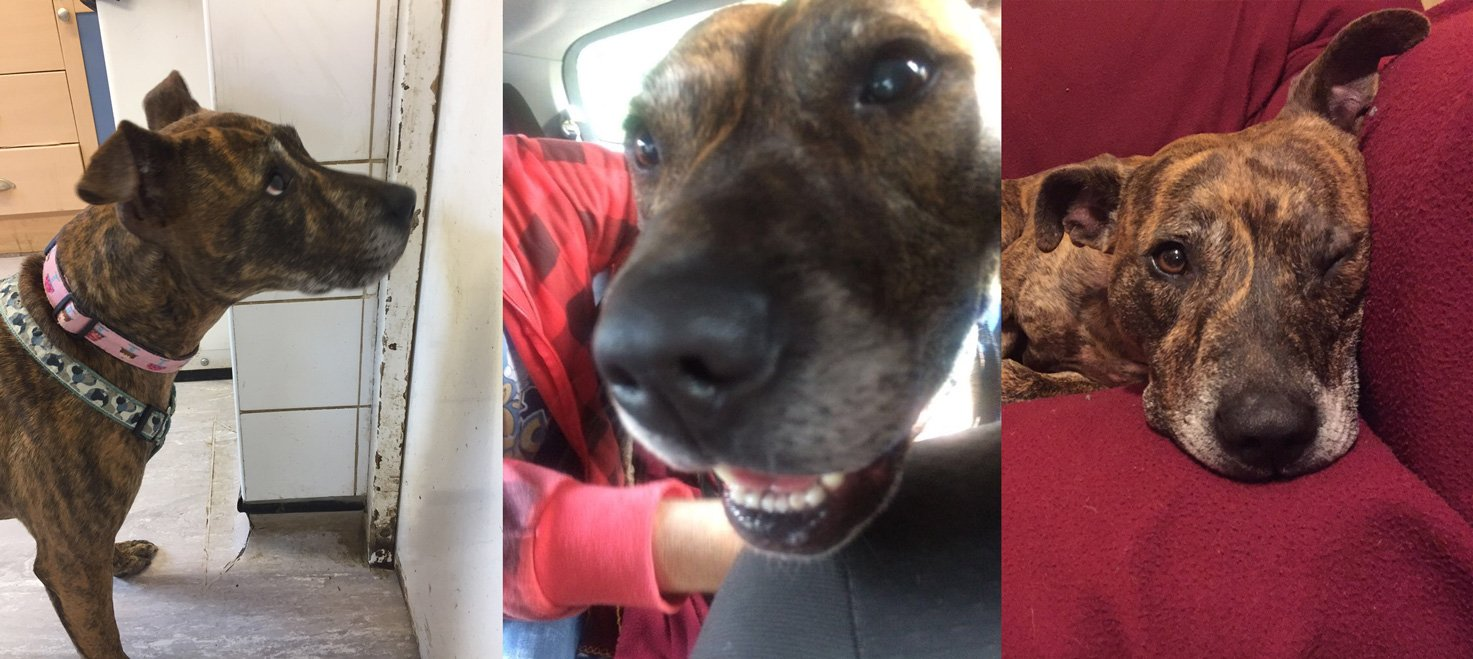 Meet Flo Waiting To Leave The Dog Pound After A Whole Year