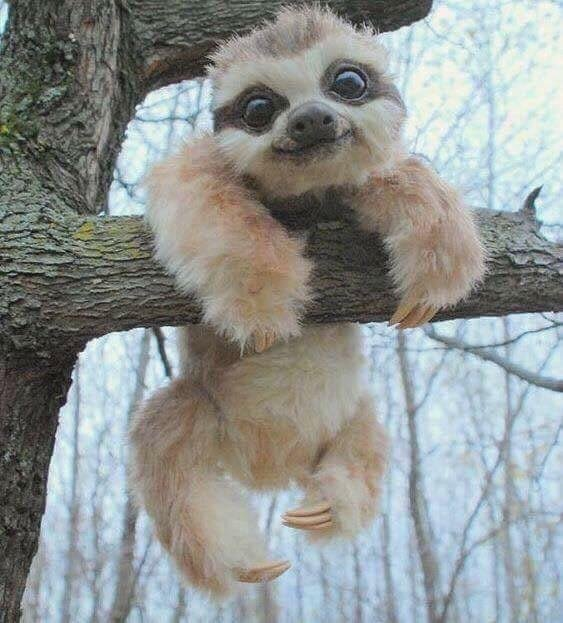 happy cute sloth put me like · happy cute sloth