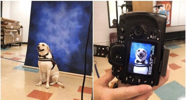 Service dog at a high school got his picture taken for the yearbook