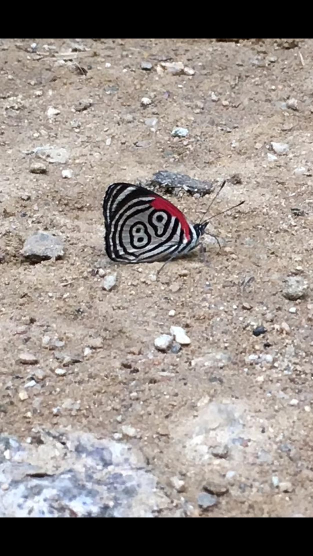 This butterfly with an 89 in its wings.