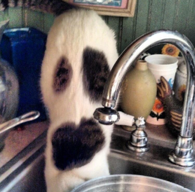 When my cat drinks out of the sink it looks like a ghost is coming out of it.